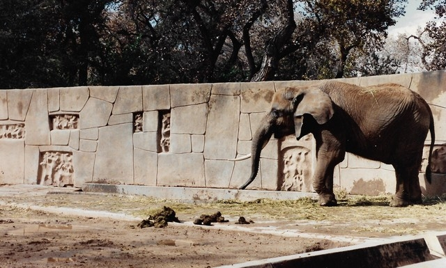Sculptured Zoo Walls